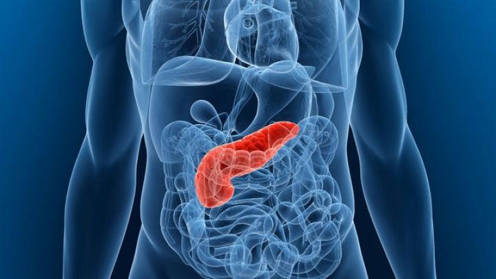 În SUA vor fi puse în vânzare pancreasuri artificiale pentru transpant! Vor salva mii de vieţi omeneşti