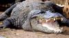 Australia: O femeie risca să fie atacată de un CROCODIL. INCREDIBIL cum l-a alungat