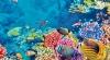 Marea barieră de corali DISPARE. Nu mai există nicio şansă de a se regenera