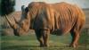 Misiune COMPLICATĂ pentru pădurarii unei rezervaţii naturale. Drama prin care a trecut un rinocer (VIDEO)
