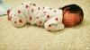 ŞOCANT! Fetiţă de o lună de zile, scoasă la vânzare pe un site pentru 5.000 de euro (FOTO)