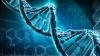 Descoperirea care ar putea răsturna detaliul-cheie în reproducerea speciei umane