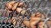 Închisoarea teroriştilor dezertori. Unde se află taberele speciale pentru ei (VIDEO)