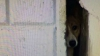 ŢI SE RUPE INIMA! Un câine, salvat după ce a stat 3 ani prins între zidurile unui magazin (VIDEO)