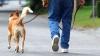 HOROSCOP: Ce rasă de câini ţi se potriveşte, în funcţie de zodie