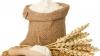 Ucraina, liderul mondial la exportul de făină. Câte mii de tone a livrat ţara vecină