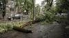 La un pas de a se prăbuşi pe carosabil. Un copac s-a rezemat de o maşină parcată neregulamentar (FOTO)