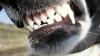 Câinii maidanezi au rupt bucăţi dintr-o maşină. CE A MAI RĂMAS DIN EA (VIDEO)