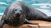 STUDIU: Anumite specii de vieţuitoare nu se pot adapta suficient de rapid pentru a ţine pasul cu schimbările climatice