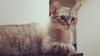Pufoşenii ADORABILE! Cele mai frumoase pisici din lume (GALERIE FOTO)