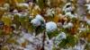 NINGE în Ucraina! Meteorologii anunţă ninsori pentru toată săptămâna (VIDEO)