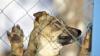 Cum pot animalele de dimensiuni mici să ucidă mai mulţi oameni decât marii prădători ai naturii