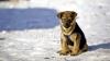 FĂRĂ INIMĂ! Câine chinuit pentru amuzamentul unor adolescenţi (VIDEO)