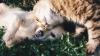 Ziua internațională a animalelor, marcată astăzi în toată lumea