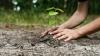 Să ne facem ţara mai verde! Zeci de angajaţi ai Ministerului Mediului au plantat puieţi în toată ţara