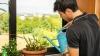 Cel mai bun îngrășământ natural pentru plantele de apartament