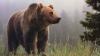 IMAGINI ŞOCANTE! Momentul în care ursul care a speriat Sibiul este împuşcat (VIDEO 18+)