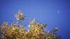 METEO 19 octombrie 2016: Vremea se menține rece. Cerul va fi variabil, fără precipitații