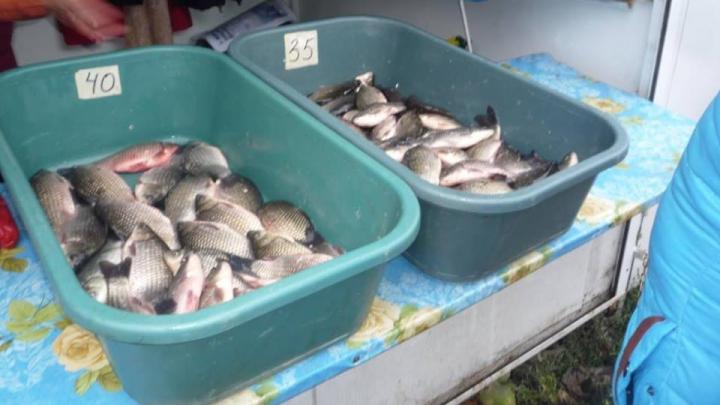 Amenzi USTURĂTOARE pentru vânzătorii ambulanţi de peşte fără acte în regulă (FOTO)