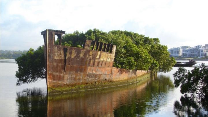 IMPRESIONANT! Fotografii care demonstrează că natura poate învinge civilizaţia (FOTO)