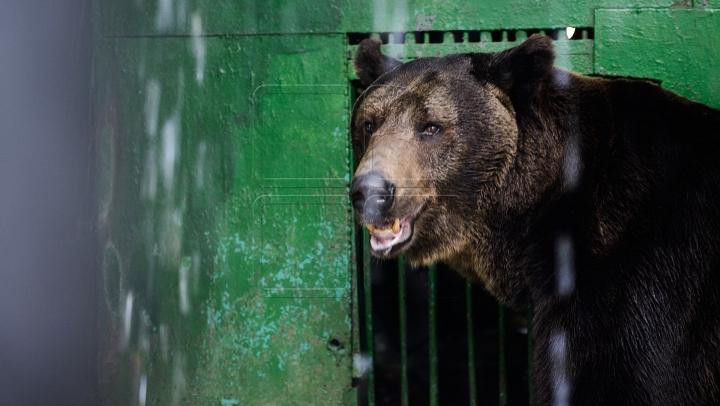 DOSAR PENAL în cazul ursului ucis în Sibiu