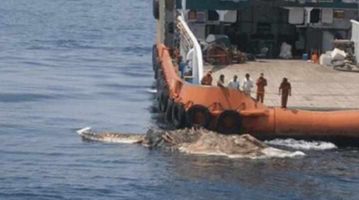 Descoperire înfiorătoare! Marinarii au îngheţat de spaimă când au văzut ce iese din adâncuri (FOTO)