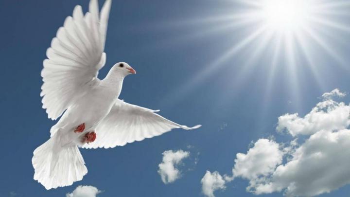 INCREDIBIL! Poliţia indiană a arestat un porumbel suspectat de spionaj