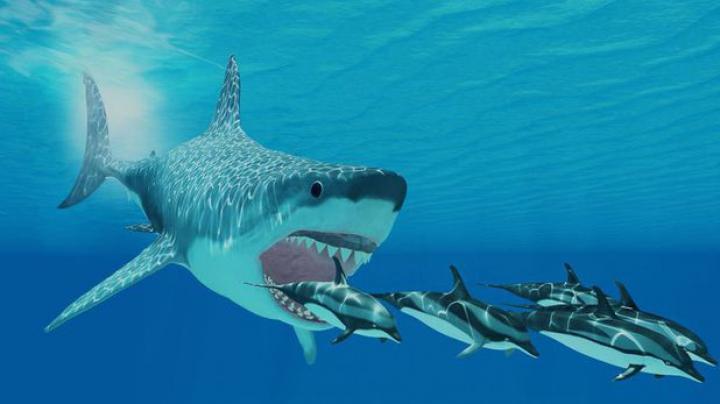 A fost descoperită a nouă specie de rechin preistoric uriaş. Era o adevărată ''maşinărie de ucis''