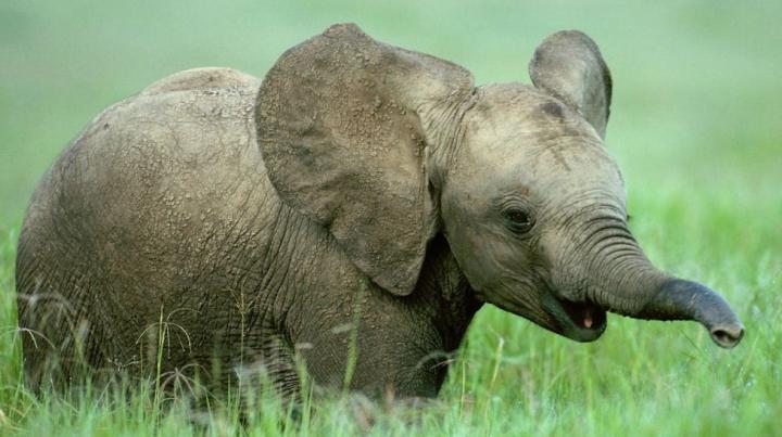 BATJOCURĂ FAŢĂ DE ANIMALE! Elefanți loviți cu smoală în flăcări de mai mulți bărbați (IMAGINE REVOLTĂTOARE)