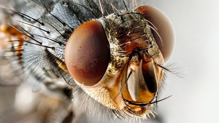 Ce se întâmplă cu mâncarea după ce aterizează o muscă pe ea. Mai poate fi consumată?