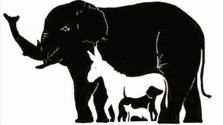 IMAGINEA care a stârnit CONTROVERSE pe Internet! Află câte animale sunt în imagine (FOTO)