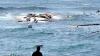 Peste 200 de oameni au murit înecați în apele Mării Mediterane