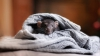 NO COMMENT: O femeie a descoperit un şoarece mort cusut într-o rochie (FOTO)
