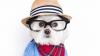 ADORABIL! Căţelul hipster care face SENZAŢIE pe Internet (GALERIE FOTO)