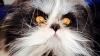 E câine sau pisică? Creatura care uimeşte Internetul (FOTO)