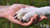 STUDIU: Câinii sunt capabili de memorie episodică, la fel ca oamenii, anunță cercetătorii în premieră