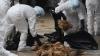 ALERTĂ la granița cu România! A fost identificat un caz de GRIPĂ AVIARĂ la o fermă de curcani