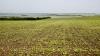 COMPENSAŢII în valoare de 45 MILIOANE de lei. Care agricultori vor beneficia de ajutor din partea statului