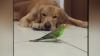 NO COMMENT! Cel mai răbdător patruped: Se împacă de minune cu opt papagali şi un hamster (VIDEO)