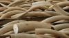 Fildeși de elefant şi coarne de rinocer, DISTRUSE de autorităţile vitenameze