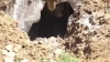 Muncitorii AU FOST ÎNGROZIŢI! Ce animal URIAȘ a ieșit de sub pământ (VIDEO)