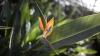 Zona tropicală din Chişinău! Grădina Botanică înfloreşte în prag de iarnă (FOTOREPORT)