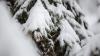 IARNA-I GREA, OMĂTU-I MARE! Viscolul şi ninsorile puternice au pus stăpânire pe ţările vecine
