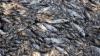 China: Circa 250 de tone de pești morți, descoperite într-un râu din centrul țării