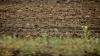 Fermierii, nevoiți să-și amâne lucrările de toamnă din cauza temperaturilor: Ceva se întâmplă cu timpul