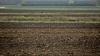 Grâul și culturile cerealiere de toamnă, în PERICOL. Nivelul de umiditate în sol este scăzut