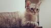Studiu: Oamenii care au pisici sunt mai inteligenți decât cei care dețin câini