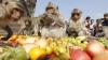 Thailanda: Banchet pentru maimuțele din localitatea Lopburi (FOTO)