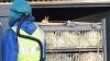 SUTE DE MII de raţe, OMORÂTE în Olanda pentru prevenirea răspândirii gripei aviare