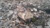 DEZASTRU! Cum arată pădurea DEFRIȘATĂ de grupările de la Bălți și Fălești. Pagube de milioane
